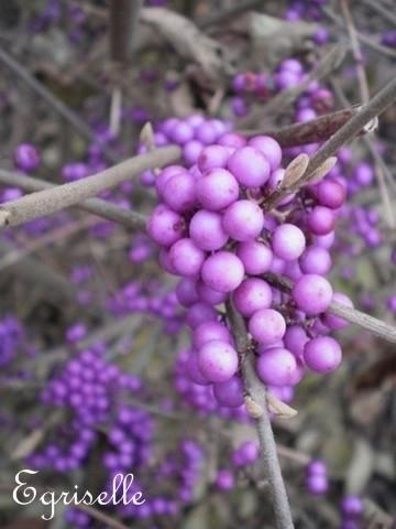 arbre aux bonbons violets 15 perles graines propos es. Black Bedroom Furniture Sets. Home Design Ideas