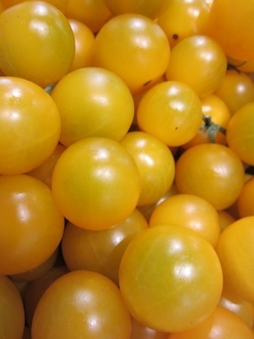 Tomate Cerise Cherry Gold Yellow  *** 10 Graines proposées ***